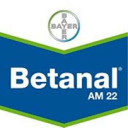 betanal_am22_175