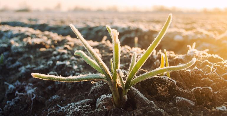 ¿Cómo proteger nuestros cultivos de las heladas?